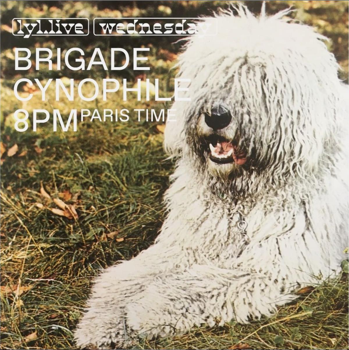 Brigade Cynophile Lyl Radio